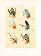 Orvis Fishing Flies Print (No. 30470005)