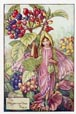 Flower Fairy Print - Wayfaring Tree (No. 70670303)