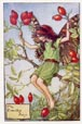 Flower Fairy Print - Rose Hip (No. 70670313)