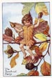 Flower Fairy Print - Beechnut (No. 70670319)