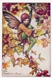 Flower Fairy Print - Hawthorn (No. 70670320)