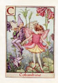 Flower Fairy Print - Columbine (No. 70780003)