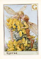 Flower Fairy Print - Gorse (No. 70780007)