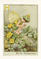 Flower Fairy Print - Herb Twopence (No. 70780008)