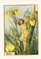 Flower Fairy Print - Iris (No. 70780009)