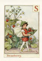 Flower Fairy Print - Strawberry (No. 70780019)