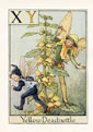 Flower Fairy Print - Yellow Deadnettle (No. 70780023)