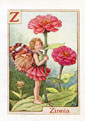 Flower Fairy Print - Zinnia (No. 70780024)